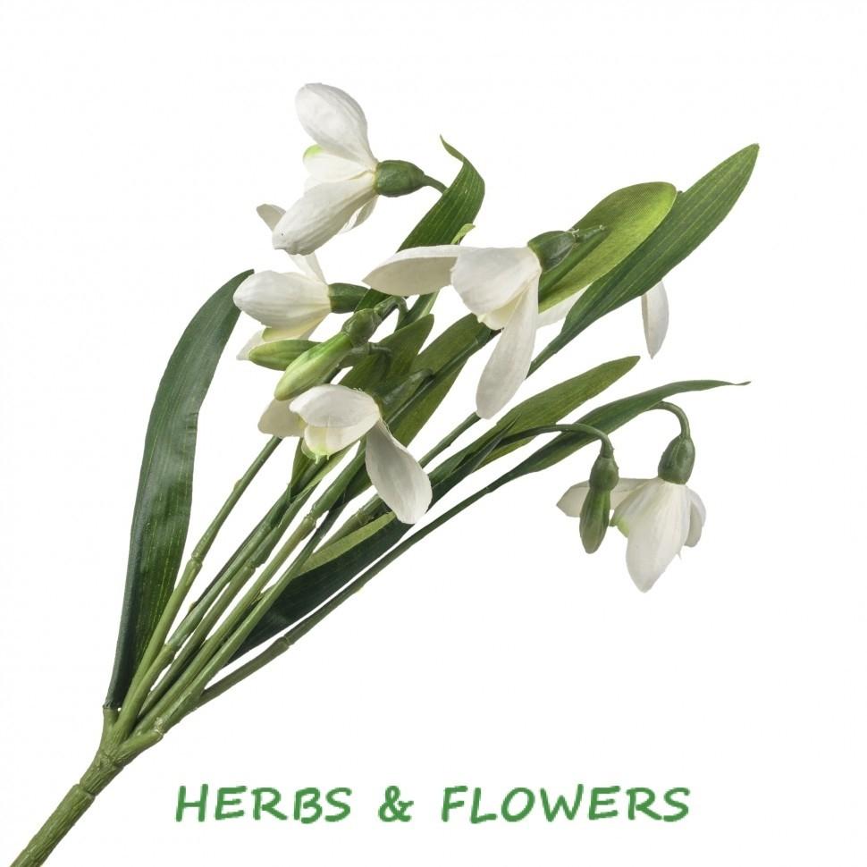 Доставкой цветы, купить цветы подснежника